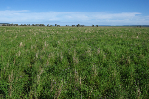 Plain pasture